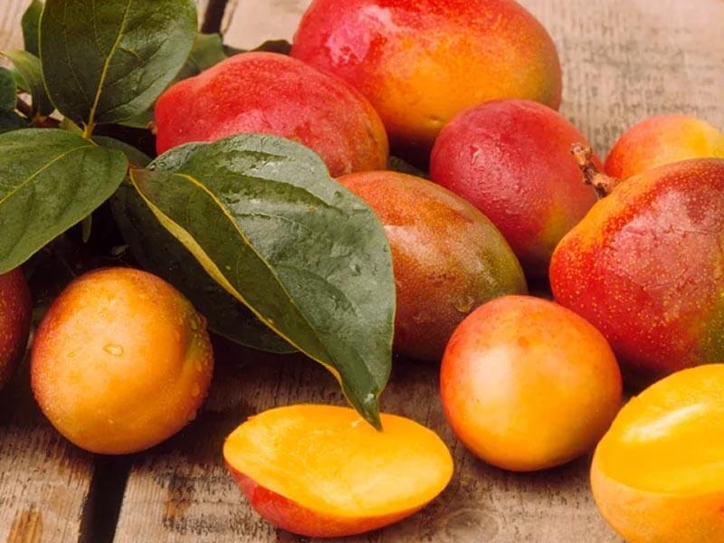 The African mango phenomenon